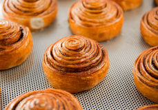 Fresh sweet rolls Royalty Free Stock Photo