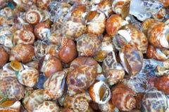 Fresh Sweet Shellfish at the market Stock Photo