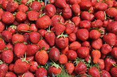 Fresh sweet strawberries Royalty Free Stock Images