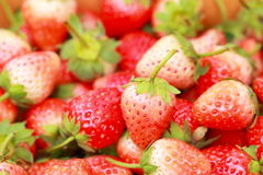 Fresh sweet strawberry. Royalty Free Stock Images
