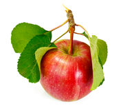 Fresh Sweet Tasty Red Apple Isolated on White Background Stock Image