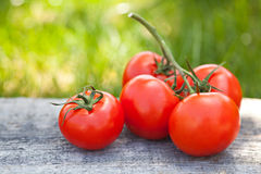 Fresh sweet tomatoes Stock Photos