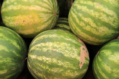 Fresh sweet watermelons at market Royalty Free Stock Image