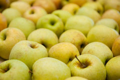 Fresh and sweet yellow apples. Bunch of fresh and sweet yellow apples Stock Photo