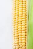 Fresh sweet yellow corn Stock Photography