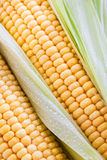 Fresh sweet yellow corn Stock Photos