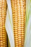 Fresh sweet yellow corn Royalty Free Stock Photos