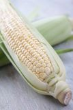 Fresh sweetcorn Stock Image