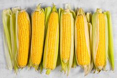 Free Fresh Sweetcorn Cobs On The Textured Grey Table Stock Images - 127030134