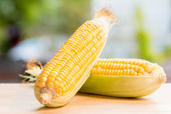 Fresh sweetcorn Royalty Free Stock Images