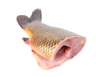 Fresh tail of carp fish. Royalty Free Stock Photography