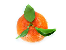 Fresh Tangerine Royalty Free Stock Image