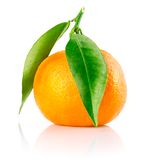 Fresh tangerine fruit with green leaves isolated Royalty Free Stock Photos