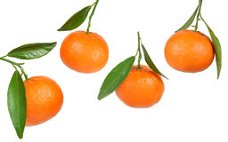 Fresh tangerine fruits Stock Photos