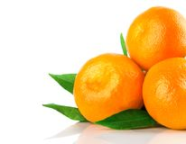 Fresh tangerine fruits with green leaves isolated Royalty Free Stock Image
