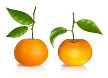 Fresh tangerine fruits with green leaves. Stock Photos