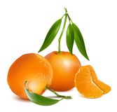 Fresh tangerine fruits with green leaves Stock Images