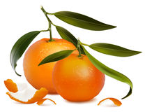 Fresh tangerine fruits with green leaves and tange Royalty Free Stock Photos