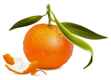 Fresh tangerine with green leaves and tangerine pe Royalty Free Stock Image