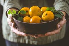 Fresh tangerine in hands stock photos