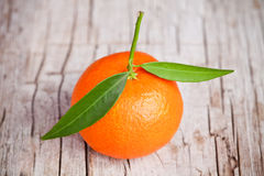 Fresh tangerine with leaves Royalty Free Stock Image