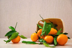Fresh tangerine oranges fruit with leaves Stock Photo