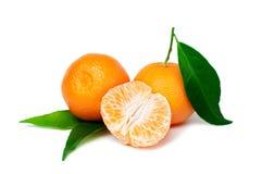 Fresh tangerine Royalty Free Stock Images