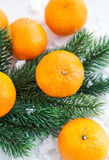 Fresh tangerine with  spruce branch Royalty Free Stock Image