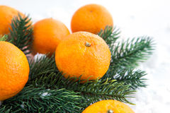 Fresh tangerine with spruce branch Stock Image