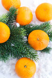 Fresh tangerine with  spruce branch Royalty Free Stock Photos