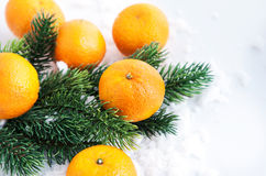 Fresh tangerine with  spruce branch Stock Photography
