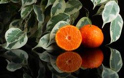 Fresh Tangerine with water splash cut tree. Tangerine with water splash fresh, wet, clear tropical, cut tree royalty free stock images