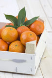 Fresh tangerines Stock Images
