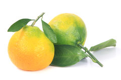Fresh Tangerines Green Leafs Royalty Free Stock Photography