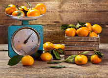 Fresh tangerines with leafs Stock Images