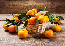 Fresh tangerines with leafs Royalty Free Stock Image