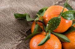 Fresh Tangerines with leaves Stock Photos