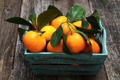 Fresh tangerines with leaves in the basket. On wooden table Stock Images