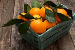 Fresh tangerines with leaves in the basket. On wooden table Stock Photography
