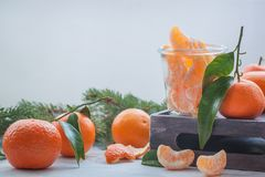 Fresh tangerines with leaves and a branch of a fir tree Russian Christmas and New year tradition. Fresh tangerines with leaves and a branch of a fir tree Royalty Free Stock Image