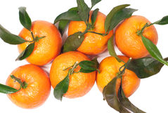 Fresh tangerines with leaves isolated on white. Six fresh tangerines with leaves isolated on white Royalty Free Stock Photos