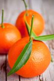 Fresh tangerines with leaves Royalty Free Stock Images