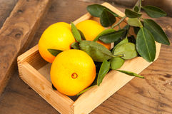 Fresh tangerines with leaves in wooden box Royalty Free Stock Photography