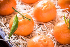 Fresh tangerines in tranportation crate Royalty Free Stock Images