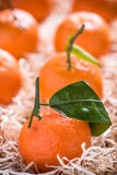Fresh tangerines in tranportation crate Royalty Free Stock Photos