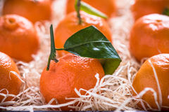 Fresh tangerines in tranportation crate Royalty Free Stock Photo