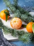 Fresh tangerines on white rustic board. Winter tangerines frame on white rustic wooden board with spruce branches on blue background Stock Photos