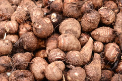 Fresh Taro Root( Stock Photos