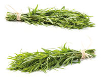 Fresh tarragon herb. Bunch isolated on white background stock photography