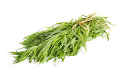 Fresh tarragon herb Stock Image